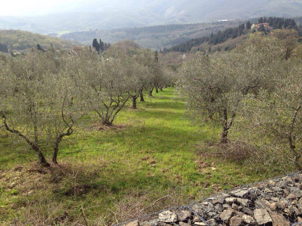 terreno agricolo vendita calenzano
